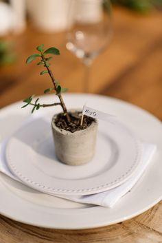 concrete possted succulent