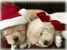 Sweet puppies