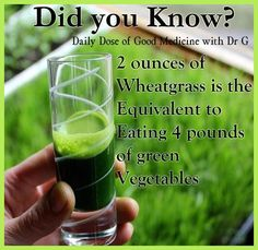 Wheat Grass.  I wonder what sort of straps I would need to use to get my kids to take a shot of this each morning lol