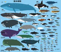 鲸鱼 - ค้นหาด้วย Google