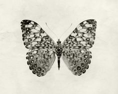 Butterfly Photo Minimalist Butterfly Print Black and White