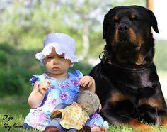 I *L O V E* Rottweilers  .jpg (800×633)