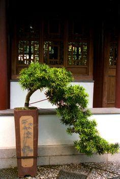 Bonsai IV, Suzhou-style Bonsai Garden, Singapore. | Opened i… | Flickr