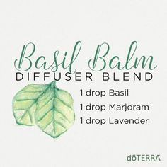 doTERRA Marjoram Essential Oil Uses with Recipes - Best Essential Oils Lavender Essential Oil Uses, Marjoram Essential Oil, Doterra Essential Oils, Doterra Blends, Doterra Oils For Sleep, Essential Oil Diffuser Blends, Doterra Diffuser, Diffuser Recipes, Bedtime