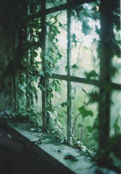 ♕ ivy covered view