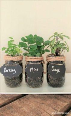 Ideas For Kitchen Window Sill Herbs Mason Jars Mason Jar Herbs, Mason Jar Herb Garden, Pot Mason Diy, Mason Jar Flowers, Diy Flowers, Herbs Garden, Flowers Garden, Mason Jar Projects, Mason Jar Crafts