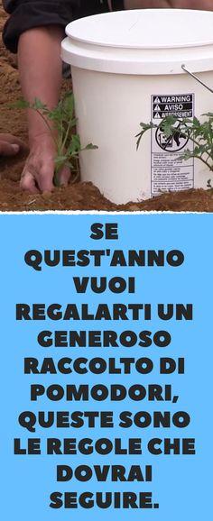 Se quest'anno vuoi regalarti un generoso raccolto di pomodori, queste sono le regole che dovrai seguire. Gnome Garden, Green Life, Vegetable Garden, Gardening, Plants, Gardens, Fantasy, Home, Green