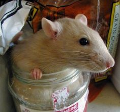 Prevent a Rodent party in your pantry