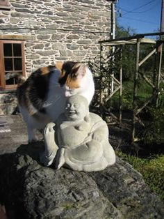 Buddha and cat