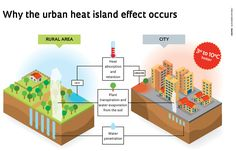 Whiter roofs, brighter future, info graphic. Heat Island Effect