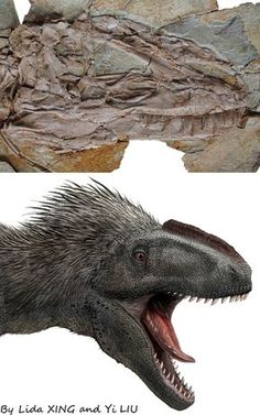 A gigantic feathered dinosaur from the Lower Cretaceous of China http://www.xinglida.net/Yutyrannus/Yutyrannus.htm
