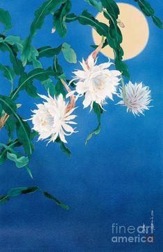 Flower Prints, Flower Art, Wall Art Prints, Poster Prints, Japanese Artists, Botanical Illustration, Chinese Art, Fine Art America, Artwork
