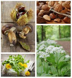 Baladez-vous dans les bois à la recherche de plantes et nourriture sauvage à ramasser et à cuisiner, pour le plus grand plaisir des papilles.