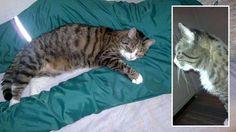Ville-kissa huolehti muistisairaasta isännästään loppuun asti – sai sankaripalkinnon http://www.iltasanomat.fi/lemmikit/art-2000001128195.html