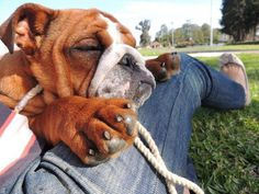How wonderful to cuddle with Mom and enjoy a nap together in the warm summer grass. Posted from Baggy Bulldogs