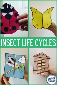 Butterfly Project, Butterfly Kids, Butterfly Life Cycle, Bee Life Cycle, Life Cycle Craft, Science Projects For Kids, Science For Kids, Science Books, Science Lessons