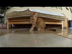 Cats vs. Laser / via http://laughingsquid.com/cats-chasing-lasers-in-dramatic-slow-motion-caught-with-a-gopro/#
