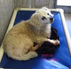 Blind senior and his young best friend were surrendered to busy animal control