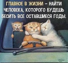 Sarcastic Quotes, Funny Quotes, Words For Girlfriend, Funny Cats, Funny Animals, Russian Humor, Happy Quotes Inspirational, Funny Cat Compilation, Funny Phrases
