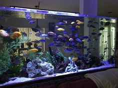 An aquarium is a pleasant manner of displaying that you simply love nature and that you've a need to deal with it. A house aquarium is one of the best. Wall Aquarium, Cichlid Aquarium, Aquarium Terrarium, Nature Aquarium, Aquarium Design, Marine Aquarium, Aquarium Fish Tank, Fish Tank Wall, Coral Aquarium
