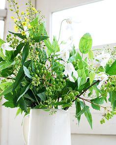 green white summer clematis