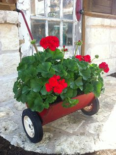 Vintage Yard Spreader with Red Geraniums - Cute idea - Now I know what to do with the old ones I have.  :-)