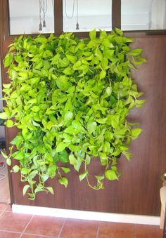 Green Walls @ Cabinet de Avocatura Green Walls, Herbs, Cabinet, Plants, Clothes Stand, Closet, Herb, Cupboard, Planters