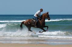 L'Aquitaine est célèbre pour ses chevaux. Ils sont une attraction touristique populaire. Always wanted to do this : )