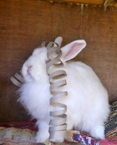 sukilii blog - Rabbit toy diy