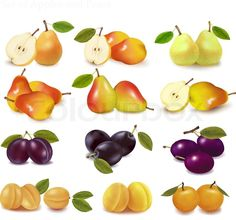 Stock vector of 'Group with different sorts of fruit. Vector.'