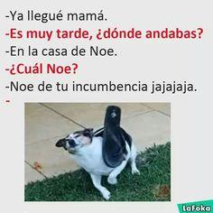 La foka memes #Noe