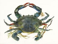 Beach House Decor, Blue Crab - Print of Watercolor, ocean, nautical, nature, natural history, cottage, art. $35.00, via Etsy.