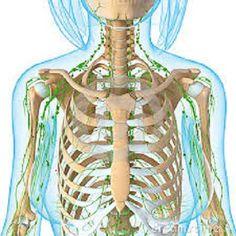 Het lymfesysteem is een groot circulatiesysteem in je lichaam, dat een stuk minder aandacht krijgt dan de bloedsomloop. Pas in de 21e eeuw keken onderzoekers dieper in de dynamiek van het lymfesyst…