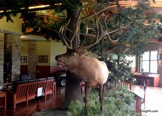 Visiting the Elk County Visitor Center in Benezette, Pennsylvania - http://uncoveringpa.com/elk-county-visitor-center