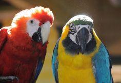 """http://www.heikeholz.de/tu-dein-ding/ … und nicht, weil du begabt bist. Handle aus Freude, aus Leidenschaft – einfach, weildu es liebst! """"Nutze die Talente, die du hast. Die Wälder wären sehr still, wenn nur die begabtesten Vögel sängen.""""(Henry van Dyke) Welcher Vogel fragt schon danach, ob uns sein Gesang gefällt. Er singt, weil er das Bedürfnis dazu hat. Er singt, weil es sein """"Programm"""" ist. Wir Menschen beurteilen dann vielleicht, ob der Klang des einen Kehlchens schöner ist als …"""
