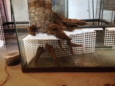 Gnarly's 29 Paludarium Build: Tree root and eggcrate base