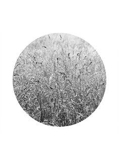 Another look at my #etsy shop prints: minimalist nature art print #art #print #digital #black&white #housewarming #gray #nature #focus #simple #tranquility #peaceful #homedecor #homeinterior #wallart #artprint #printable