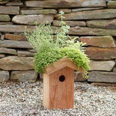 Green Roof Birdhouse in Sale SHOP Gardening at Terrain