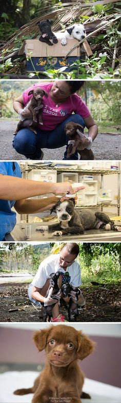 There is a place in Puerto Rico known as Dead Dog Island, a spot where hundreds of animals are dumped and left to die. But one organization is stepping in to save as many animals as they can. Full story at the link.