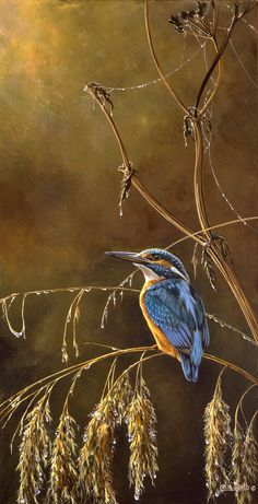A gallery of fine art oil ,watercolour paintings of wildlife,birds & portrait works . Huge range of Greeting cards in several sizes of the natural world . Acrylic Paintings, Watercolor Paintings, Canal Boat Art, Kingfisher, Wildlife Art, Natural World, Art Oil, Art Photography, Fine Art