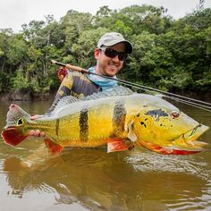 Colombian Jungle Monster on Fly   #flyfishing #peacockbass #fishing #fishingcolombia #colombia #fish #pez #pesca #pescaconmosca #monster #pescado #peacock #bass #jungle #junglefever #tucunare #pavon #cichlatemensis #testedonanimals #chooswisely #scientificanglers #clutchflyrods   This trip was made possible thanks to @flyfishingcolombia   Special thanks to my sponsors   @clutchflyrods   @nautilusflyreels   @scientificanglers   @olefloridaflyshop  @cascabelindumentaria