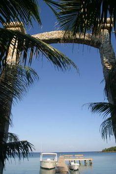 Coconut Tree, La Ceiba, Honduras