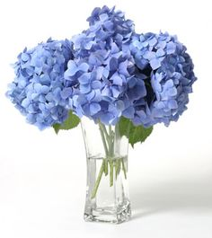 Hydrangeas: 2 brides have told me their florist said they couldn't have blue flowers. So thought i'd find some blue options...