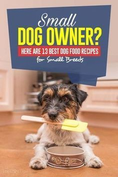Top 13 Homemade Dog Food Recipes for Small Dogs Dog Training Methods, Basic Dog Training, Training Dogs, Homemade Dog Toys, Best Homemade Dog Food, Positive Dog Training, Easiest Dogs To Train, Puppy Food, Pet Food