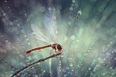 """Owlfly"" by Syuwandi"