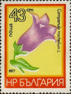 Campanula trachelium L. BULGARIA 02/03/1977