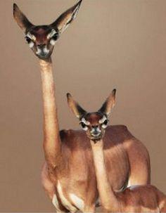 Foto's | Catootje en haar dierenvrienden