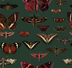 removable vintage wallpaper, butterflies pattern, dark green background, unique graphics, botanical, living room decor || #1