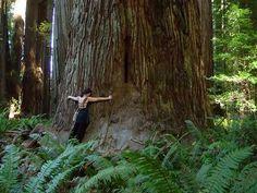 I love big trees.
