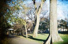 Beautiful park - Holga135BC